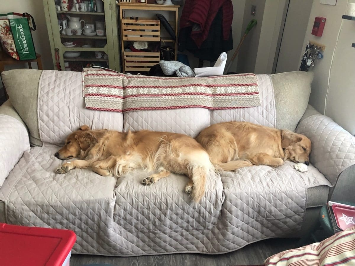 Tilly (right) and Annie (left) on one of their many couches