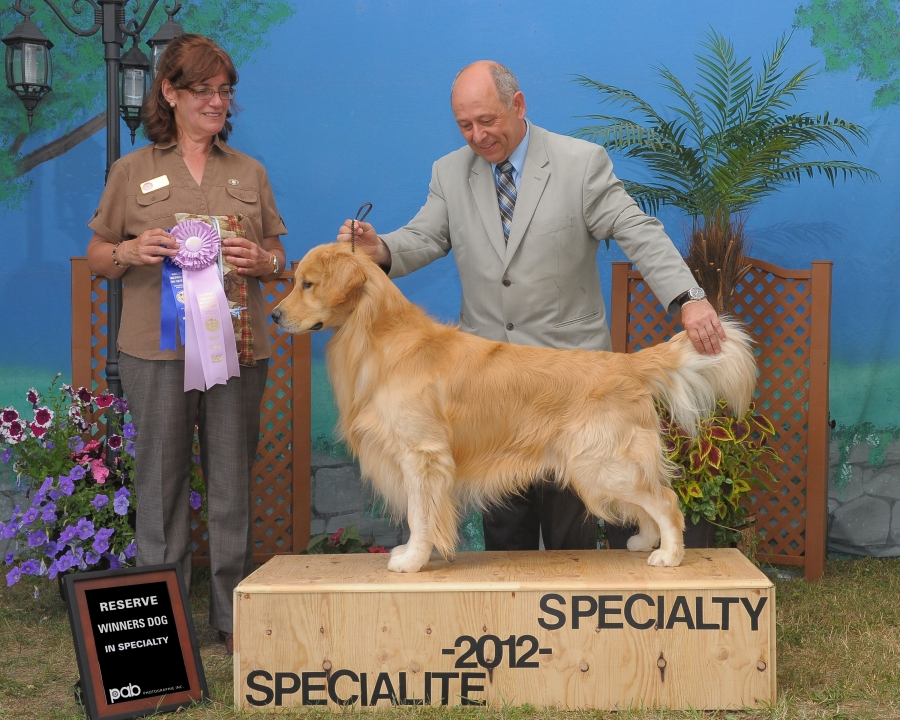 boomers-1st-dog-show-reserve-winner