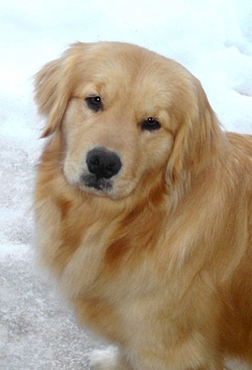 Delilah_in_snow 255 x 375