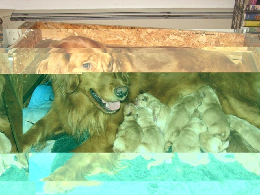 rebel-x-gabe-pups-2-25-2010