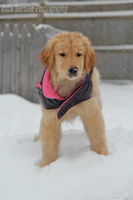puppy slide maeve winter