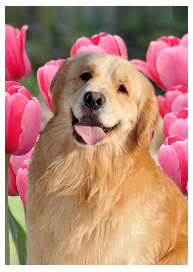 vegas-pink-tulips