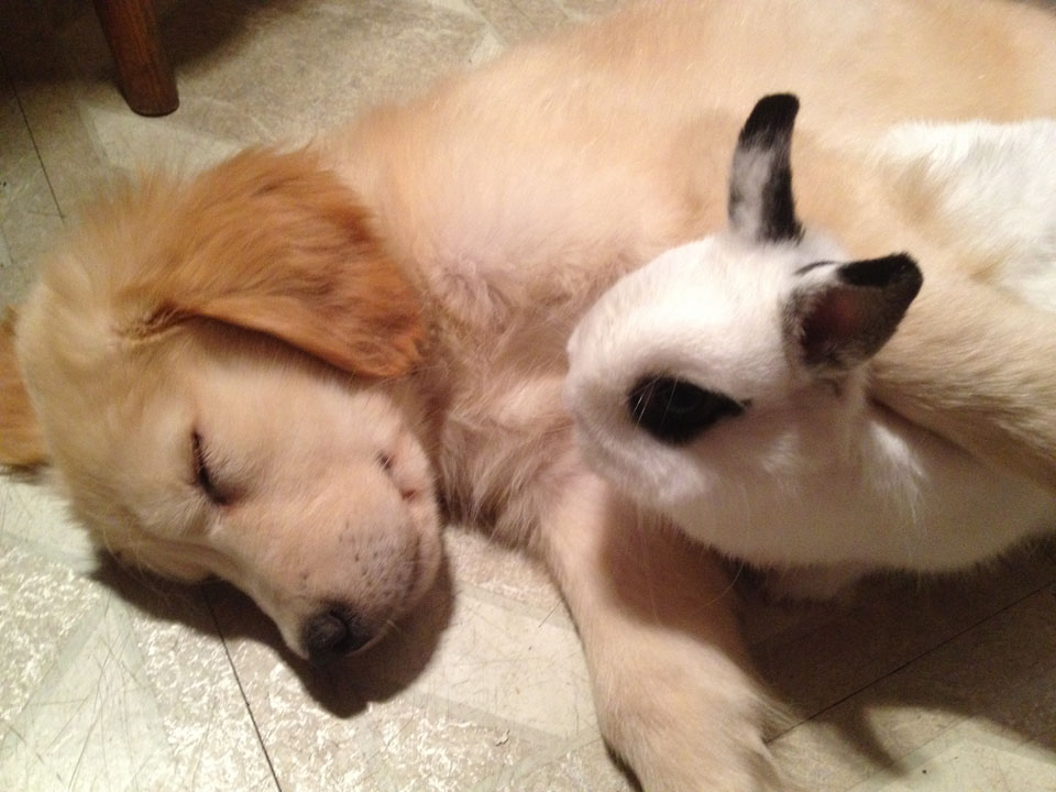 chloe-and-sammy-the-bunny