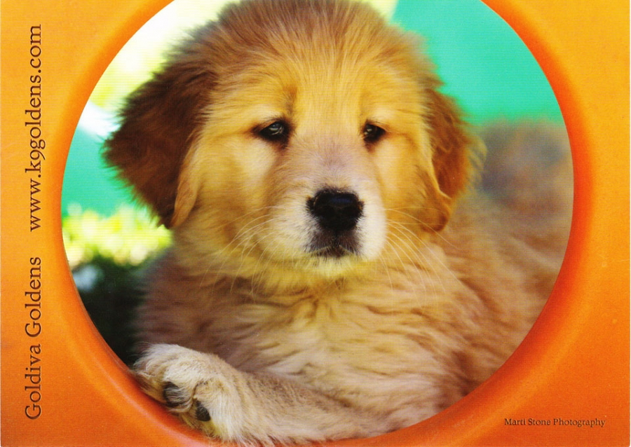 goldiva-puppy-postcard-scanned