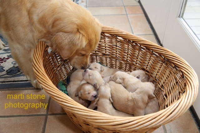 piper and pups 2014