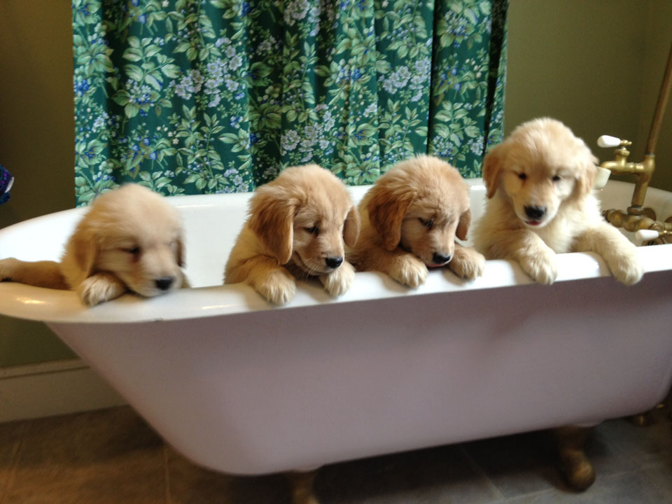 website-puppy-tub