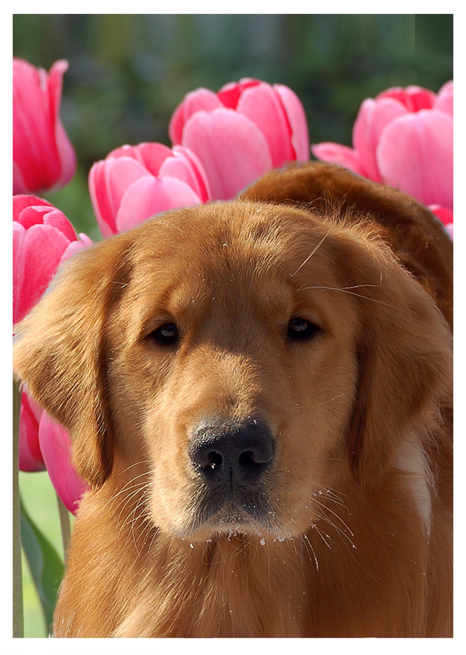 seaweed-pink-tulips