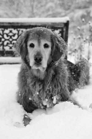 Genny,Snow, b&w